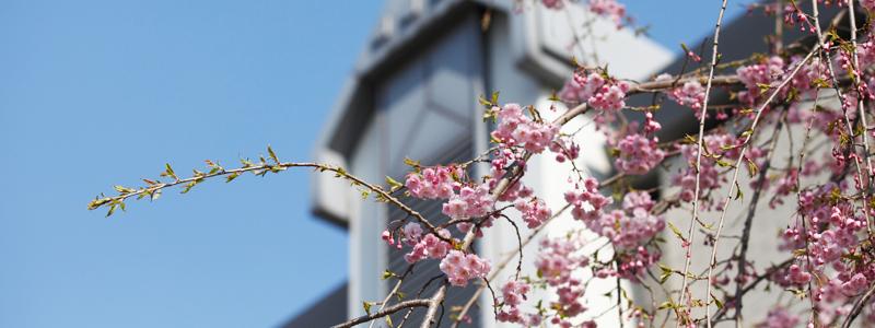 弘前大学 組織